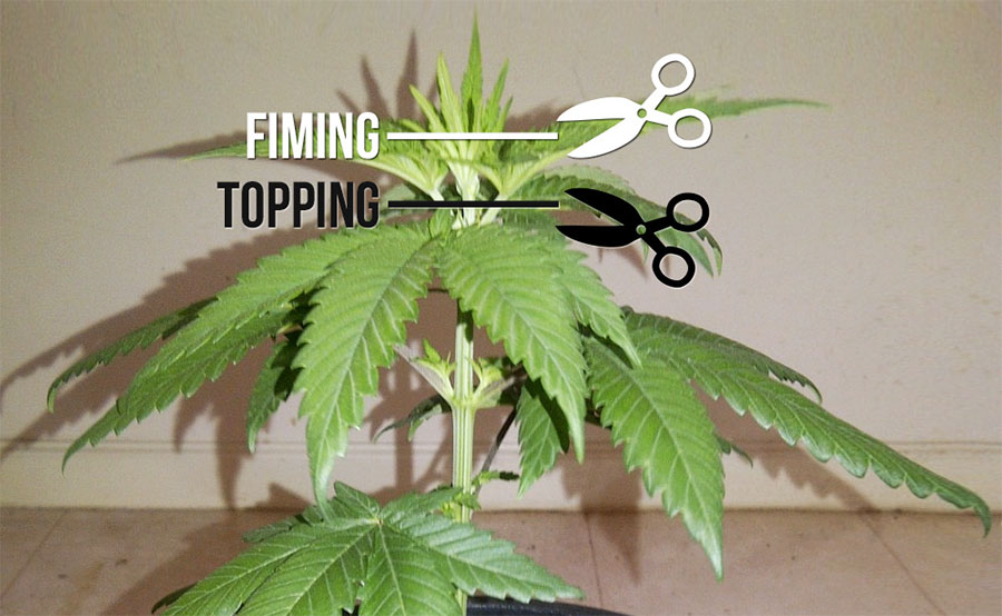 fiming-topping