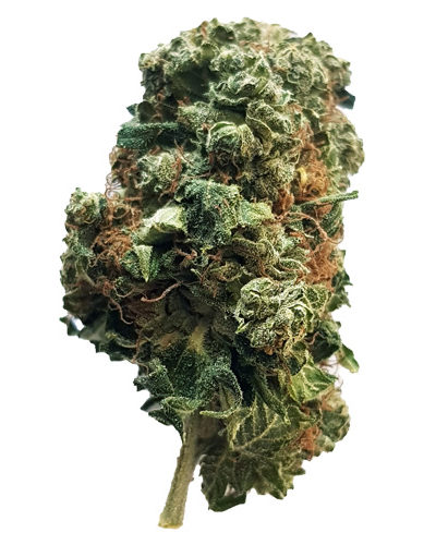 orange bud cbg yummyweed